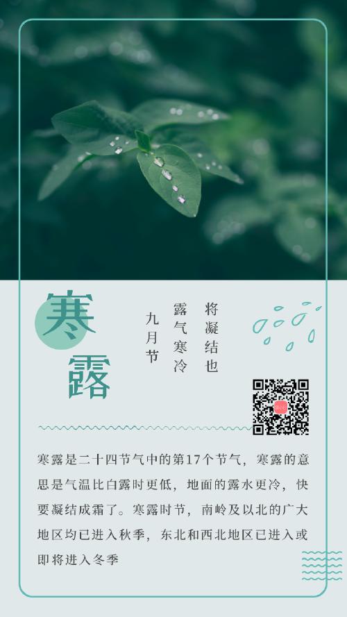 清新节日节气寒露海报