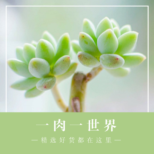 小清新多肉植物天猫淘宝主图