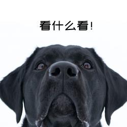 傲娇狗微博封面