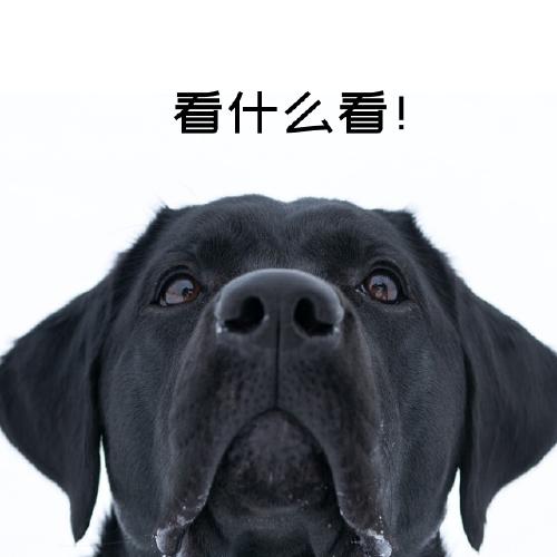 傲嬌狗微博封面