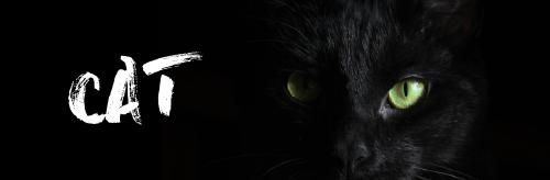 黑色貓咪微博封面