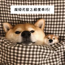 乖巧狗狗手机微博封面