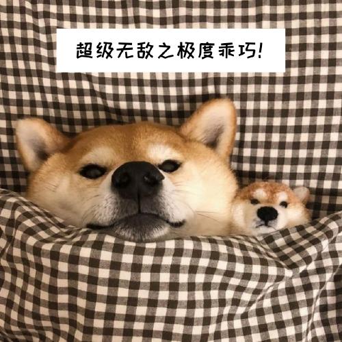 乖巧狗狗手機微博封面