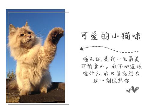 日系小清新貓咪公眾號橫版配圖