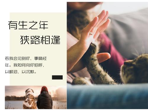 文藝寵物小貓公眾號橫版配圖