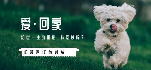 领养狗狗微博焦点图