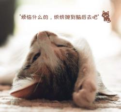 可爱猫咪生活微信朋友圈封面