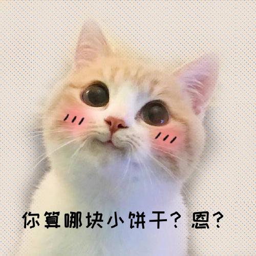 可愛貓咪手機微博封面
