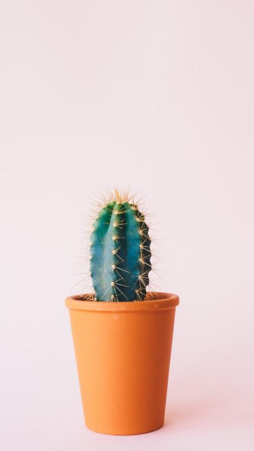 簡約清新植物攝影手機壁紙