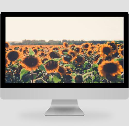 簡約清新向日葵攝影pc桌面