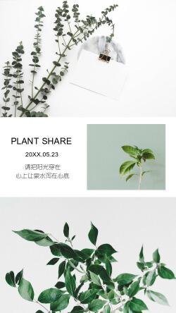 小清新植物分享拼图便签模板