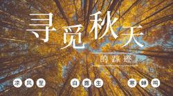 简约文艺寻找秋天横板海报
