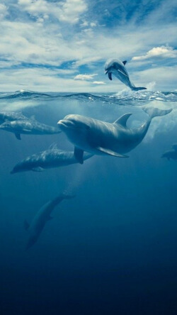 唯美深海海豚背景手机壁纸