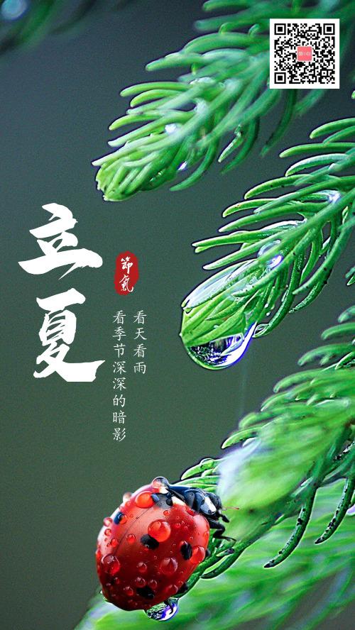 清新立夏中国二十四节气手机海报