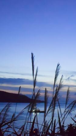 清新文艺蓝色水边芦苇丛手机壁纸