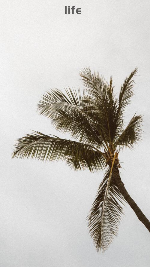 INS风简约椰子树手机壁纸