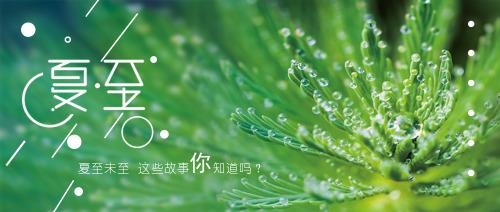 夏至绿色植物简约风公众号首图