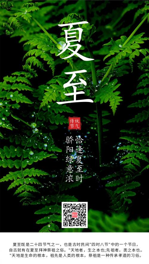 简约绿植二十四节气夏至海报