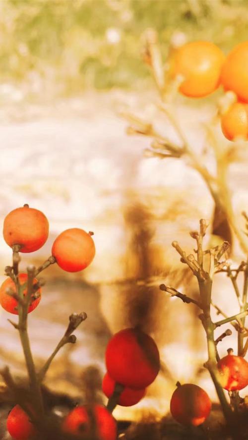 温馨植物风景暖色锁屏