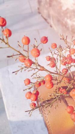 暖调夕阳中植物水果壁纸