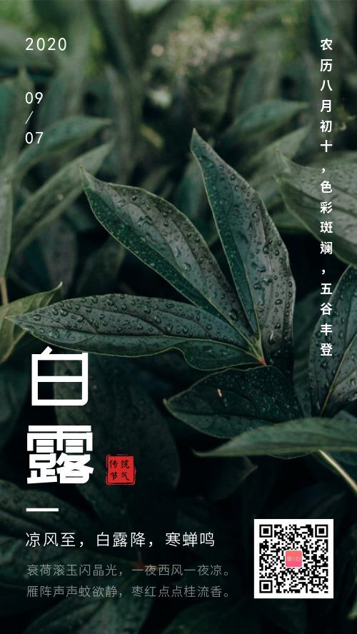 简约白露传统节气海报