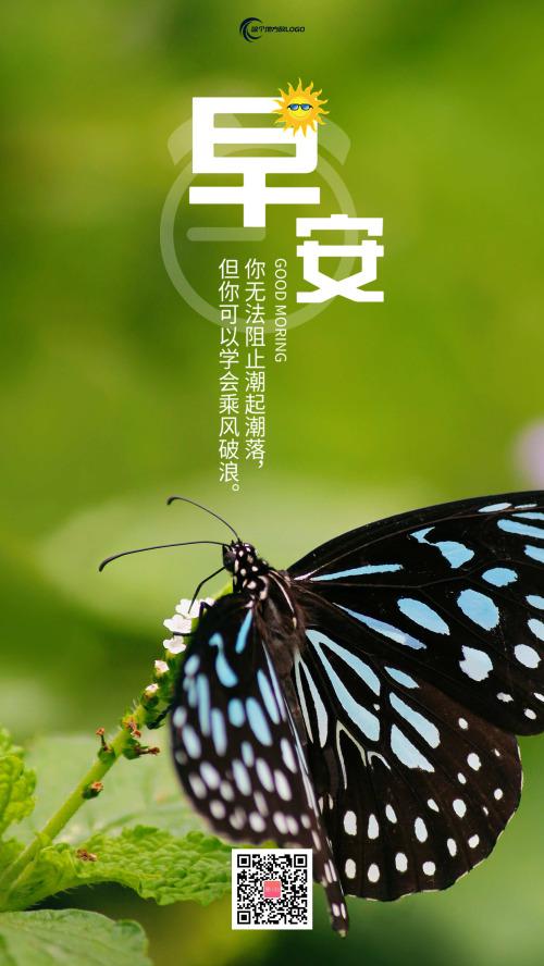 简约小清新蝴蝶早安日签