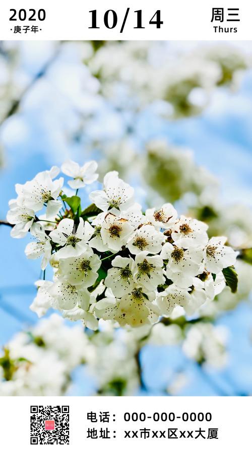 简约白色花朵早安日签
