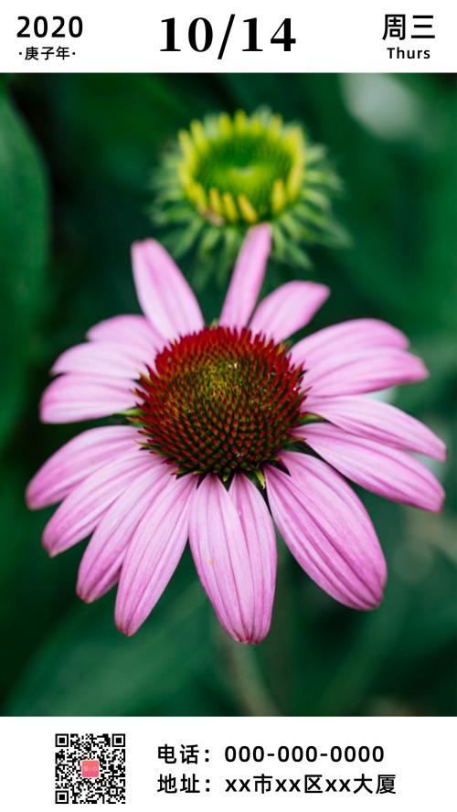 简约粉色花朵早安日签