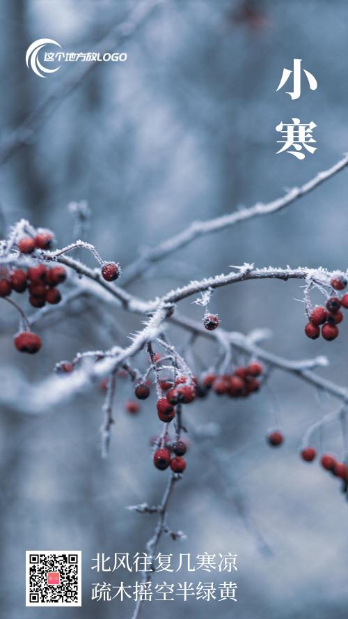 简约小寒梅花雪景摄影图海报