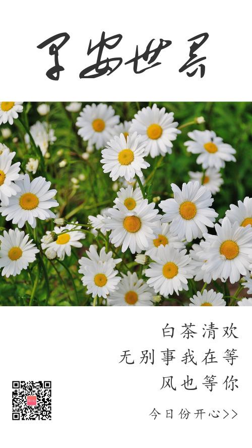 早安清新雛菊攝影圖日簽海報