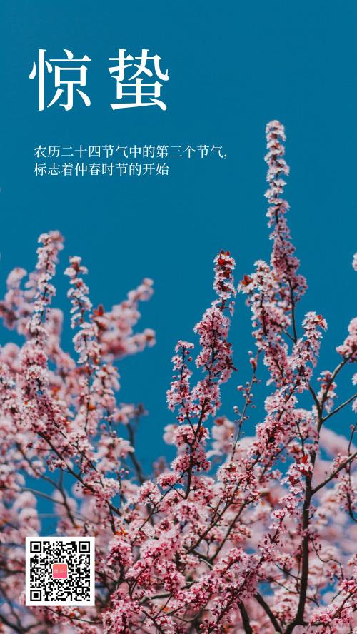 春天樱花盛开惊蛰节气海报