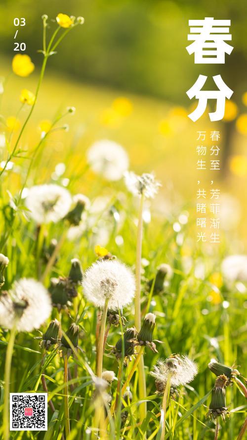 春分节气简约图文摄影海报