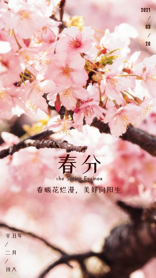春分節氣爛漫花樹春天攝影海報