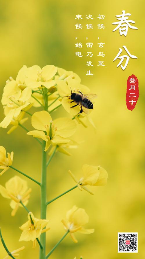 春分油菜花春天簡約圖文攝影海報